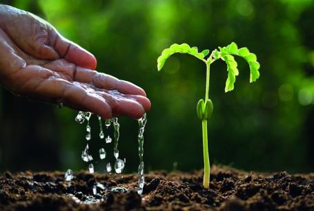 hand mit pflanze-shutterstock_403213498x